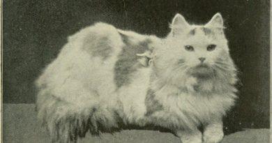 «Акустическая кошечка» ЦРУ: как животное шпионило за дипломатами СССР
