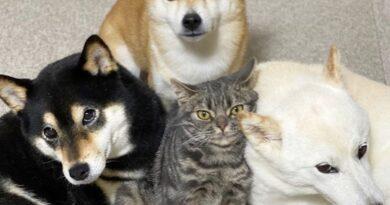 «Такой же, как братья»: считающий себя собакой кот стал звездой соцсетей