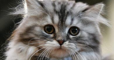 5 способов сказать кошкам, что вы их любите, на их родном языке
