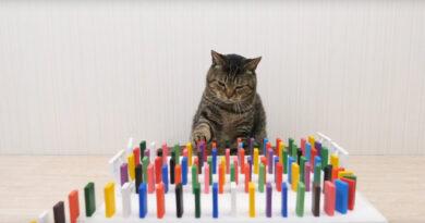 Ролик, где хозяин оригинально кормит котов с помощью домино, посмотрели 45 миллионов раз