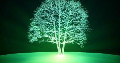 В Массачусетсе придумали, как сделать светящимися живые растения. Они могут освещать города в ночное время